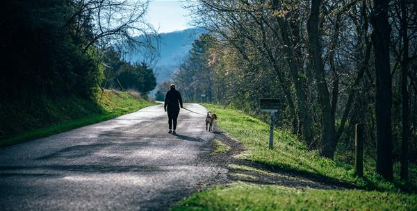 An elderly person is walking a dog down a road surrounded by trees.